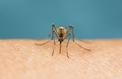 Quand une piqûre de moustique vous met sur le flanc