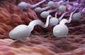 Fertilité masculine en berne : « les perturbateurs endocriniens ont une incidence »