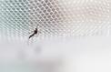 Le vaccin contre la dengue est dangereux pour certains malades