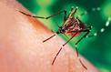 La Réunion craint une épidémie de dengue