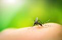 Dengue : plus de 2000 personnes contaminées à La Réunion