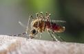 Le Paraguay a réussi à éradiquer le paludisme