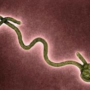 Comment Ebola a muté pour s'adapter à l'homme