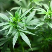 L'université d'Oxford crée un programme de recherche sur le cannabis
