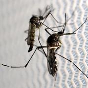 La Nouvelle-Calédonie fait face à une importante épidémie de dengue