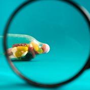Pilule, gel, slip chauffant... Où en est la recherche sur la contraception masculine?