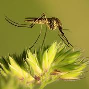 Virus du Nil: une épidémie sans précédent