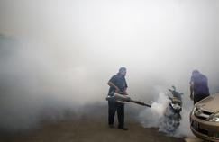 Zika: des malformations congénitales 20 fois plus fréquentes