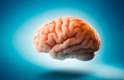 Cerveau: où se trouve le siège de la mémoire?
