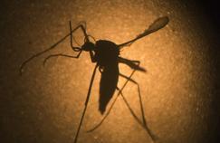 Un vaccin d'un nouveau type contre le virus Zika