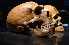 Génétique : Néandertal continue de parler en nous