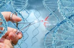 Maladie de Duchenne: des souris soignées par les ciseaux génétiques