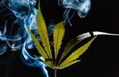 Cannabis: hors la répression, quelles autres solutions?