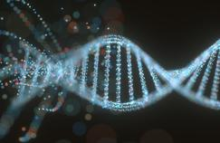 Un gène impliqué dans les anévrismes cérébraux a été identifié