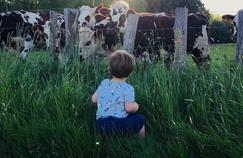 Faut-il arrêter de manger des animaux?:les dérives et les alternatives de l'élevage industriel sur France 5