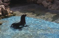 Une saison au zoo: l'otarie Tanguy, la nouvelle star du Zoo de La Flèche à découvrir sur France 4