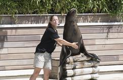 Une saison au zoo reprend en fanfaresur France 4
