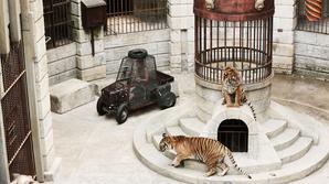 Fort Boyard : tigres, serpents, araignées... L'incroyable logistique autour des animaux