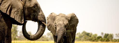 Programme TV : Faut-il regarder Dans la tête des éléphants sur France 5 ?