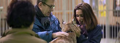 Le Monde de Jamy teste l'intelligence de nos animaux sur France 3