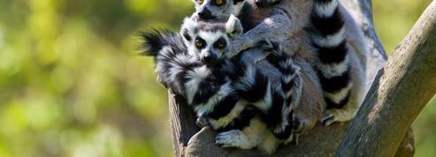 Offrez-vous un zoo pour moins de 350.000 euros