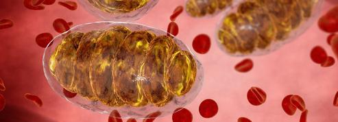 Au coeur de nos cellules, la température n'est pas de 37°C