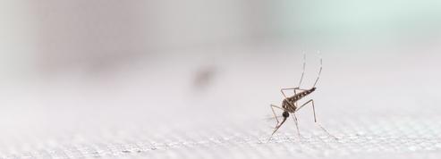 Mieux lutter contre le moustique de la dengue