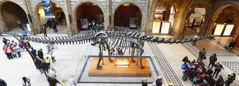 À 10 ans, il corrige une erreur du Musée d'histoire naturelle de Londres