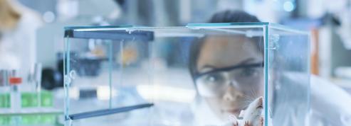 Pourquoi les perturbateurs endocriniens sont-ils si difficiles à étudier ?
