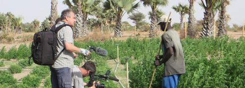 Malaria business ,l'enquête sur une plante anti-palu de France Ô