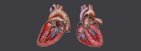 Maladies du muscle cardiaque: près d'un cas sur deux est d'origine génétique