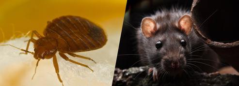 Rats et punaises de lit : une nouvelle approche pour éviter leur prolifération