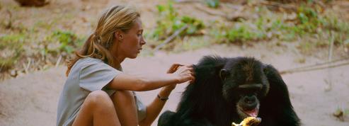 National Geographic: un portrait inédit et saisissant de Jane Goodall