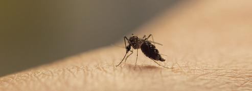 Moustiques : France 5 enquête sur le cauchemar de nos nuits d'été