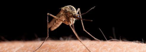 Trois personnes infectées à Nice par le virus du Nil occidental
