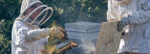 Arnaud Montebourg inaugure son école du miel à Dijon
