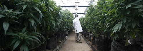 Cannabis contre l'épilepsie infantile: les autorités s'inquiètent des achats sur Internet