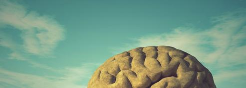 Comprendre le cerveau, un atout pour le préserver