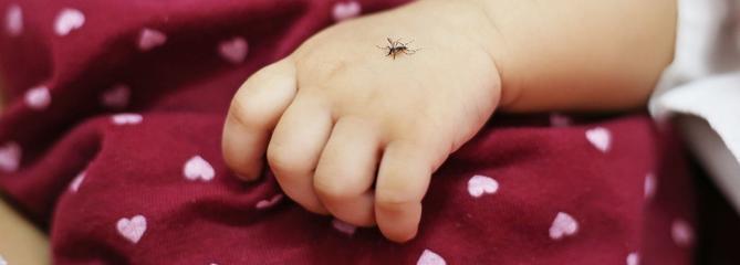 Existe-t-il des peaux à moustiques?