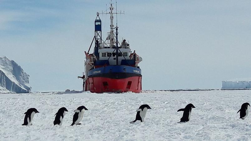 UIne colonne de manchots d'Adélie passe devant l'Astrolabe, le navire polaire de l'institut polaire français Paul-Emile-Victor et de l'administration des Terres australes et antarctiques françaises (TAAF)