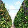 Les murs végétaux occupent 500 mètres carrés au sol.