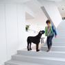 La maison sur trois niveaux est reliée par un escalier central très lumieux car vitré. ©Brice Pelleschi
