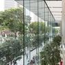 Réalisé par le célèbre cabinet Foster + Partners, l'Apple Store de Singapour intègre 13 ficus à l'intérieur de la boutique.