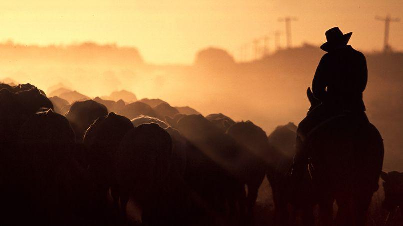 Les propriétaires qui mettent en vente leur terrain produisent 1,3% du bœuf australien.