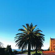 Étudier à Sydney : des grandes écoles dans un cadre idyllique