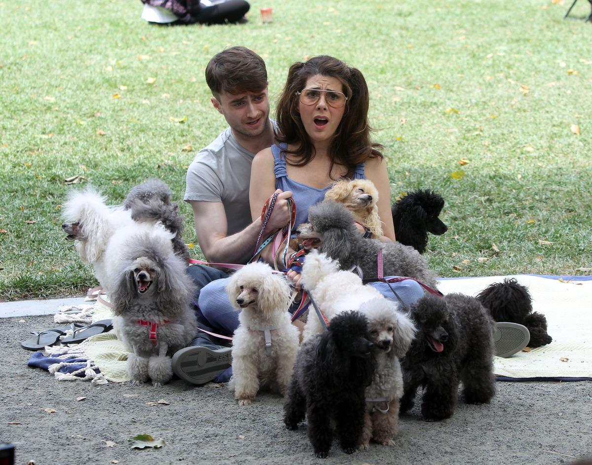 Daniel Radcliffe Dog Walking Movie