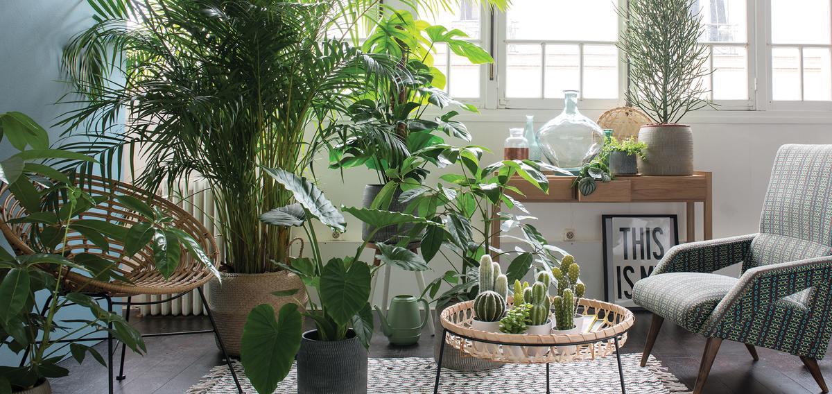 Bien choisir ses plantes d int rieur quand on n a pas la for Fausse plante verte interieur