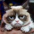 Grumpy Cat, Choupette, ces chats qui rapportent...