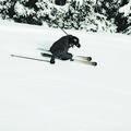Zai, les skis célestes