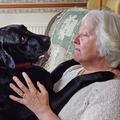 Un labrador détecte le cancer de sa maîtresse